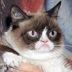 facts on Grumpy Cat